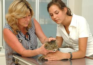 Tierarztpraxis Maul + Herget Behandlung 01