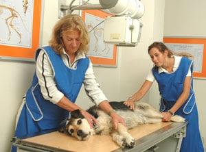 Tierarztpraxis Maul + Herget Behandlung 03