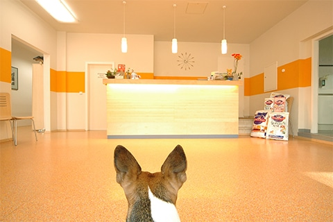 Tierarztpraxis Maul + Herget Slider 02