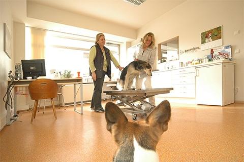 Tierarztpraxis Maul + Herget Slider 03