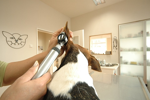 Tierarztpraxis Maul + Herget Slider 04