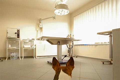 Tierarztpraxis Maul + Herget Slider 05