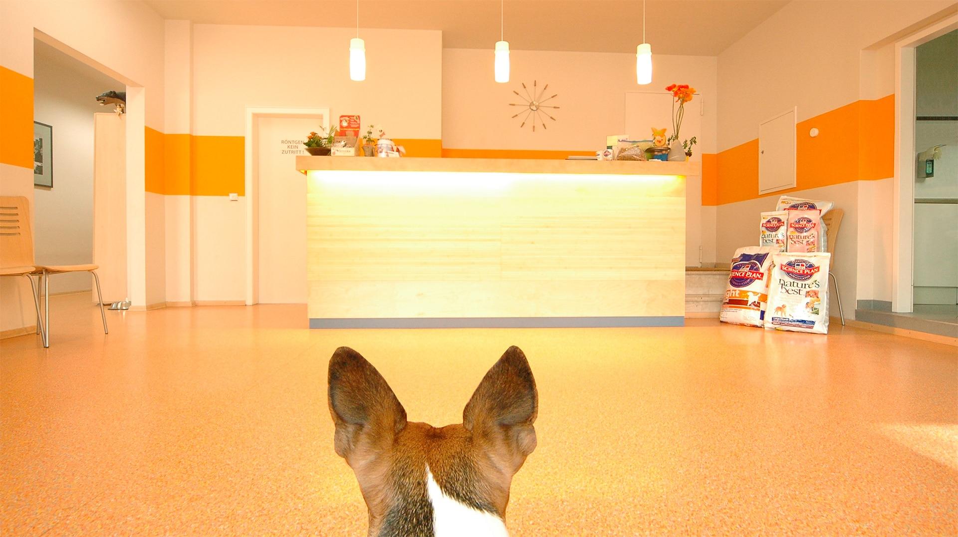 Tierarztpraxis Maul + Herget Titel