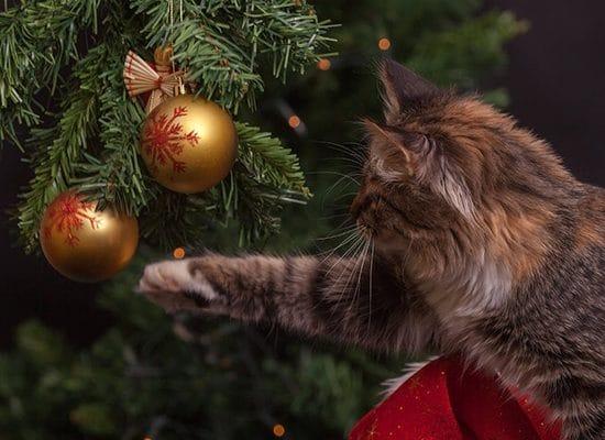 Tierarztpraxis Maul + Herget Weihnachten