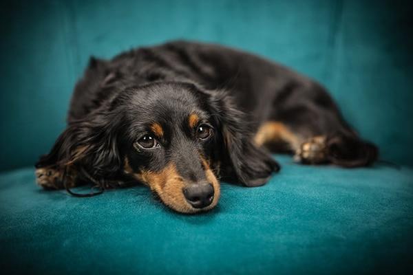Tierarztpraxis Maul + Herget Angst vorm Tierarzt