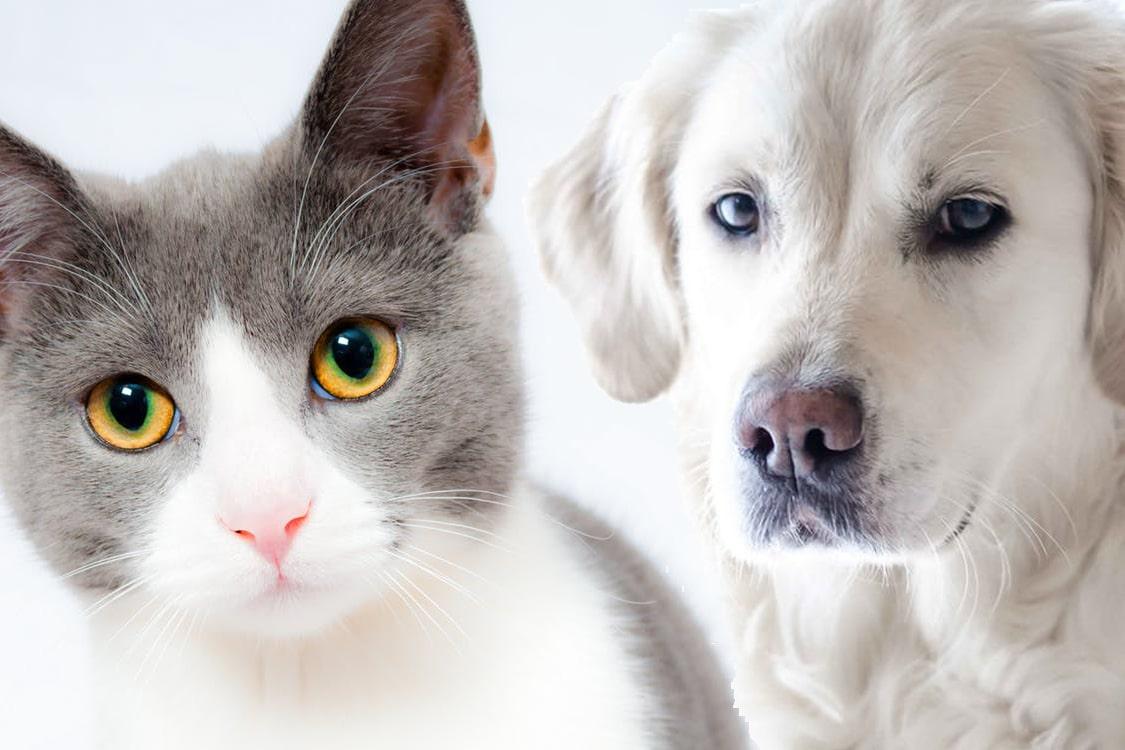 Tierarztpraxis Maul + Herget Blutdruckmessung
