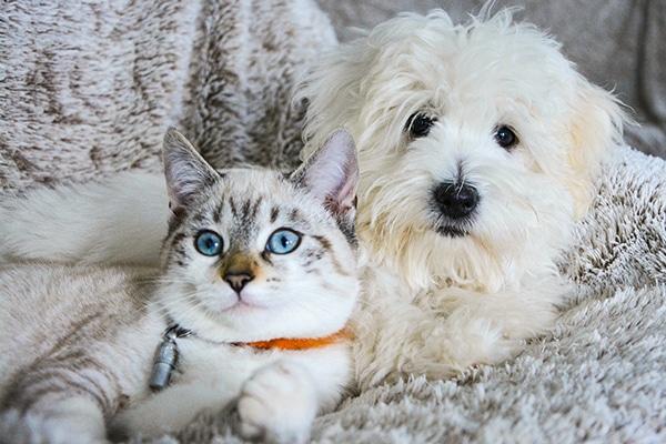 Tierarztpraxis Maul + Herget Meldepflicht