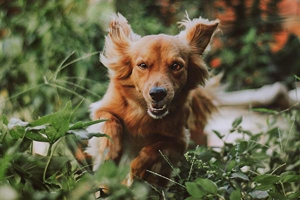 Tierarztpraxis Maul + Herget Rattenköder